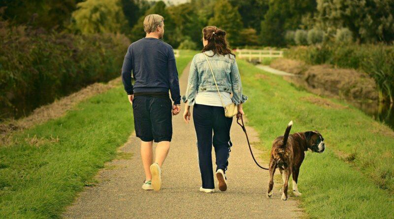 Nieuwe hondenuitlaatregels rond de Ouderkerkerplas