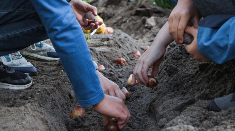 Community Garden op de Zuidas officieel geopend